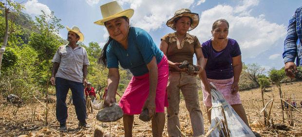 El clima y el Covid-19 cuadriplican el número de centroamericanos que pasan hambre