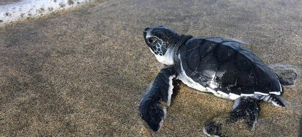 Campamentos tortugueros en México luchan por proteger el océano que nos da vida