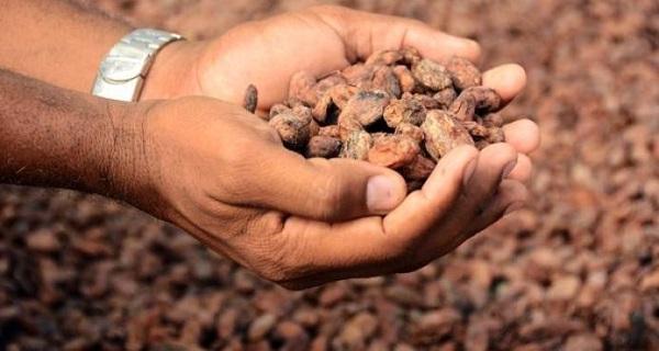 Inician estudios para mejorar producción de cacao en A.Central y RD