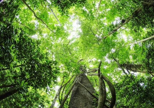 El divulgador científico David Quammen destacó que todas las nuevas enfermedades víricas provienen de especies salvajes, con las que los humanos interactúan cuando van a bosques tropicales y otros lugares donde hay incontables tipos de animales, cada uno de ellos portando virus únicos.