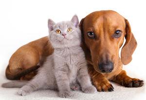 Los animales no son juguetes, ¿cuántas veces habrá que repetirlo?