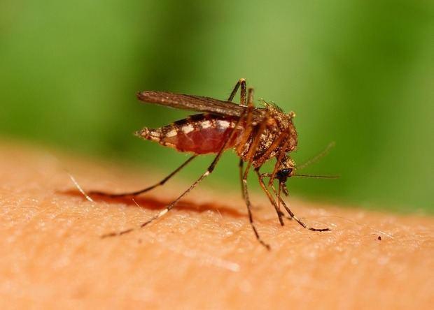 Aumentan a nueve los fallecidos por dengue en la República Dominicana