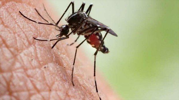 Eliminación de la malaria en Mesoamérica donde se han identificado 183 focos activos