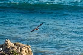 Día Mundial de los Océanos : Nuestro océano es nuestro futuro