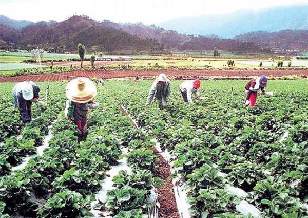 Sector agropecuario podrá cubrir 100% de demanda alimentaria del país en 2020