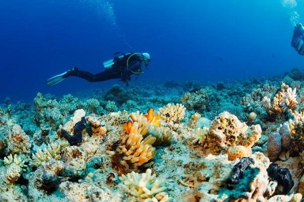 La conservación marina centra la cumbre