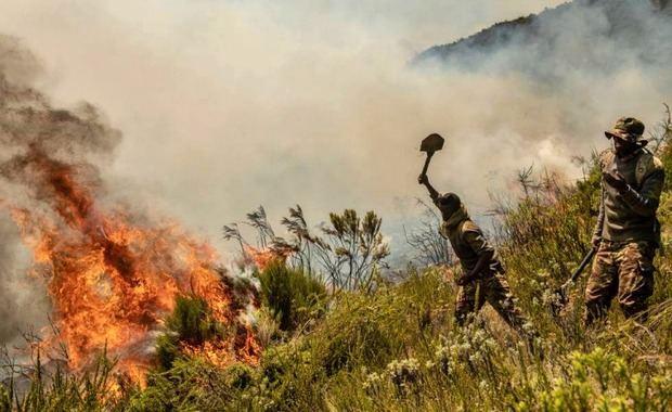 Ecologistas reclaman medidas urgentes para los incendios de la selva africana
