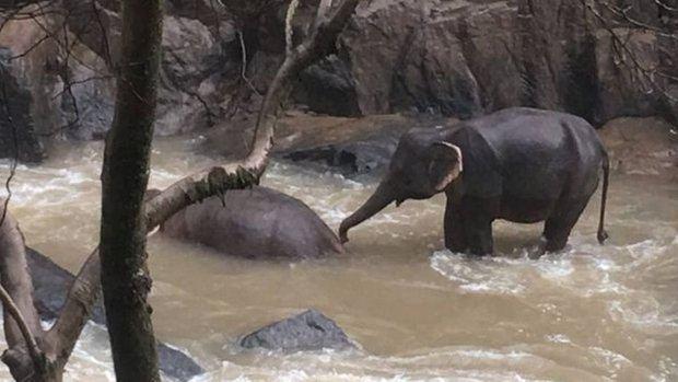El parque nacional de Khao Yai está de luto después de que diez elefantes se hayan despeñado por una cascada para salvar a una cría.