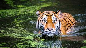 Aún es posible revertir la pérdida de biodiversidad.
