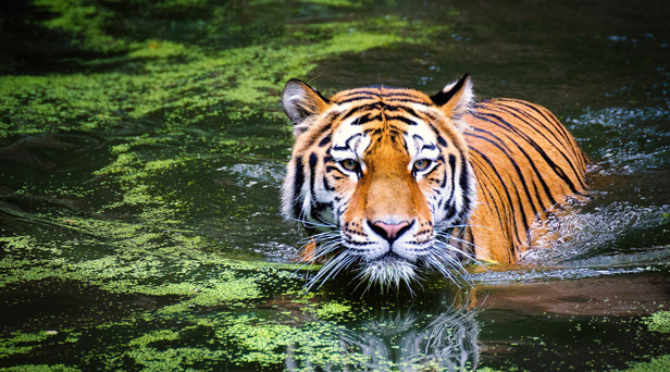 Aún es posible revertir la pérdida de biodiversidad