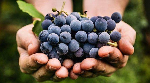 La piel de las uvas puede ayudar con la reducción de la grasa