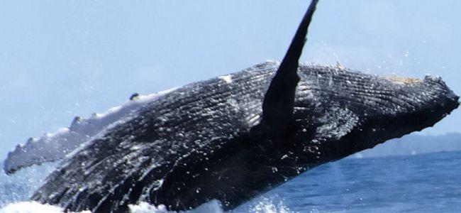 Los visitantes pueden disfrutar en Mar de Plata de unas de las principales atracciones ecoturísticas del Caribe.